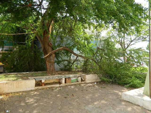 Photo of Semam orienta sobre normatização de poda ou corte de árvores