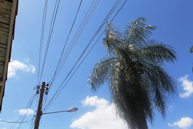 Photo of Árvores ameaçam atingir rede elétrica na Rua Petrônio Portela