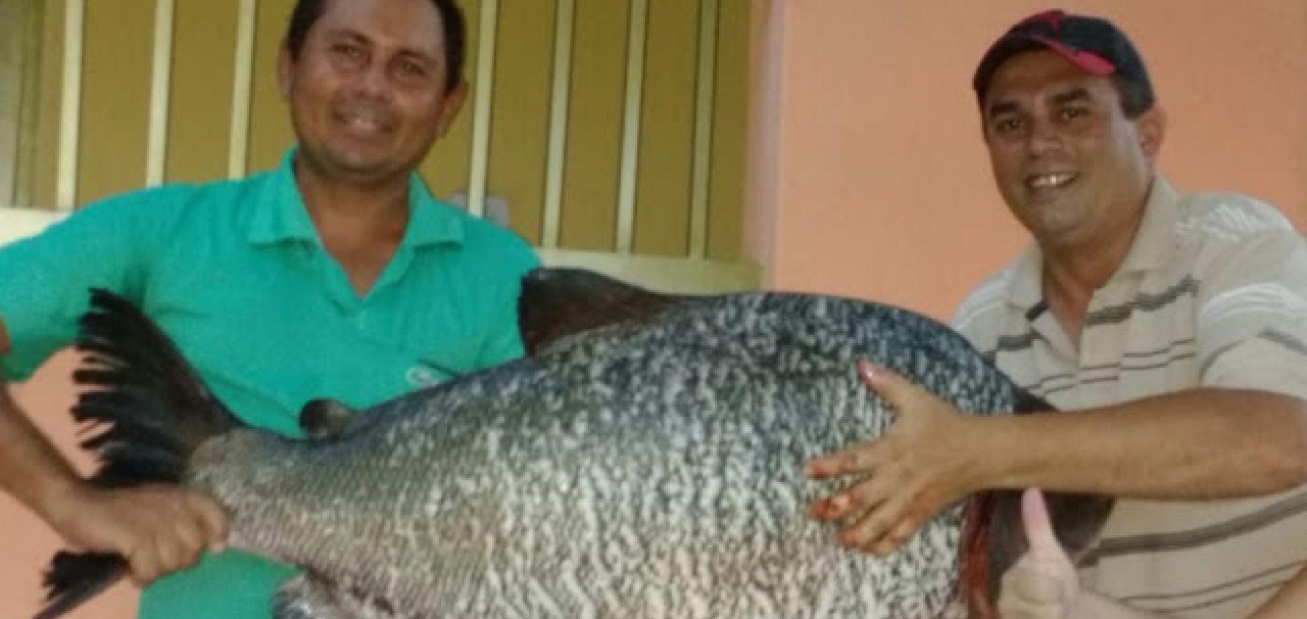 Photo of Peixe de 31 kg é pescado na Barragem de Estreito em Francisco Macedo