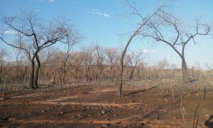 Incêndio em Santana do Piauí já dura 20 dias e destrói vegetação (Crédito: João Rodrigues)
