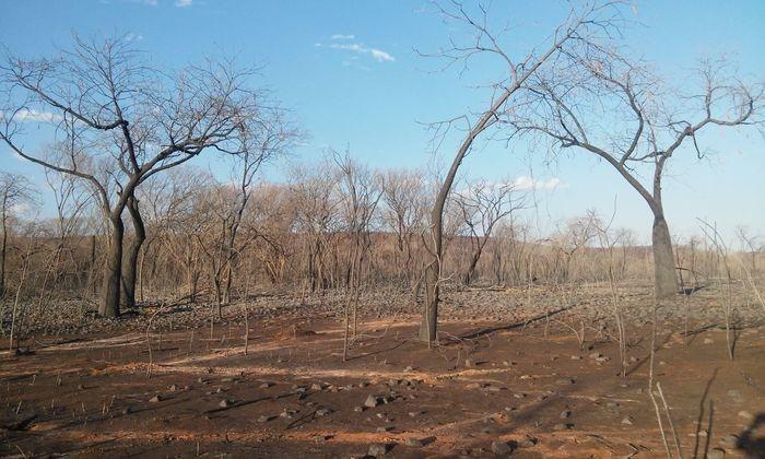 Photo of Incêndio em Santana do Piauí já dura 20 dias e destrói vegetação