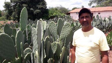 Photo of Dom Expedito Lopes ultrapassa produções nacionais no cultivo da palma adensada