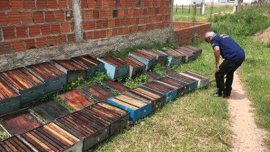 Photo of Monsenhor Hipólito: Adapi aponta ato criminoso em intoxicação de abelhas