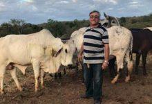 Photo of Acidente com animal mata comerciante de Simplício Mendes